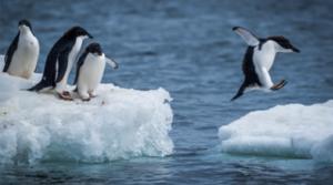 Mitarbeiterfuehrung_Pinguine